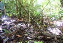 Indiani Incontattati dell'Amazzonia: una Sfida al Progresso Capitalistico